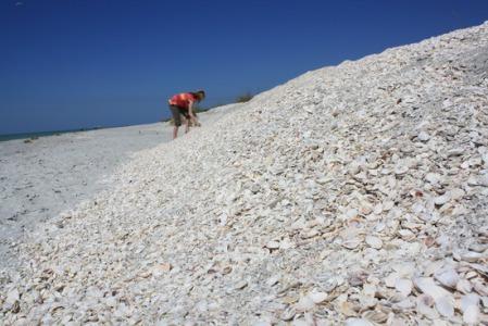 Mountains of seashells in Sanibel