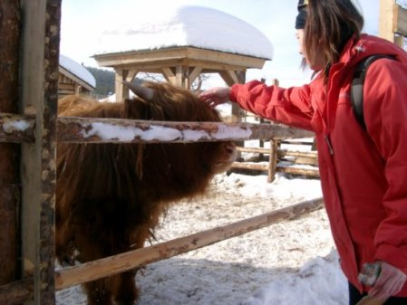 Whitefox2008 petting a hairy cow in Yllas, Finland