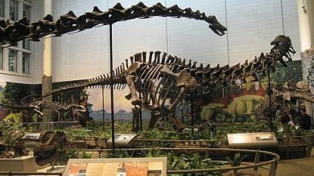 Dinosaur bones at the Carnegie Museum of Natural History